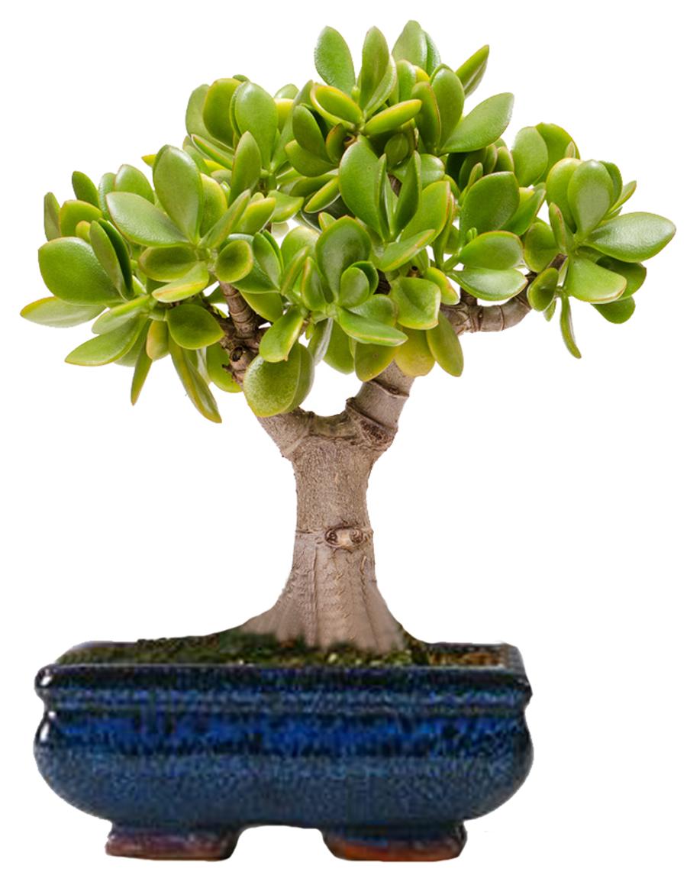 Лучшие виды и сорта листового салата  Образцовая Усадьба