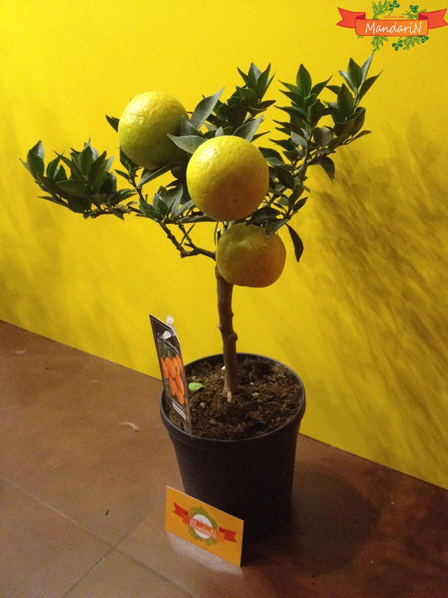 Апельсиновое