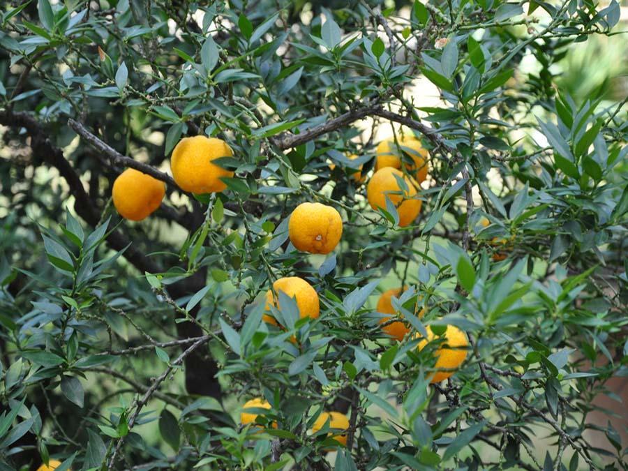 Апельсиновое 653