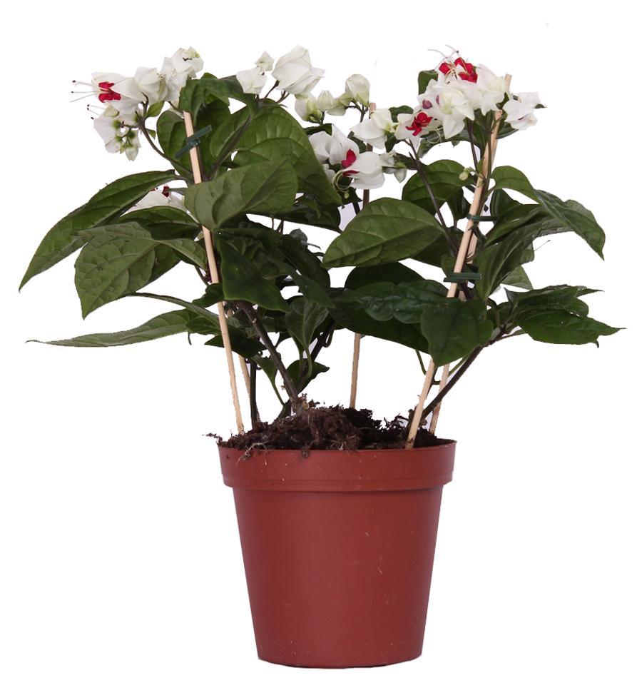 Цветы, цветущие 64