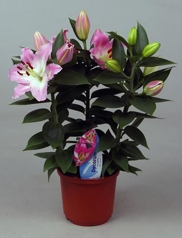 Комнатные цветы купить оптом недорого духи цветы россии купить в интернет магазине