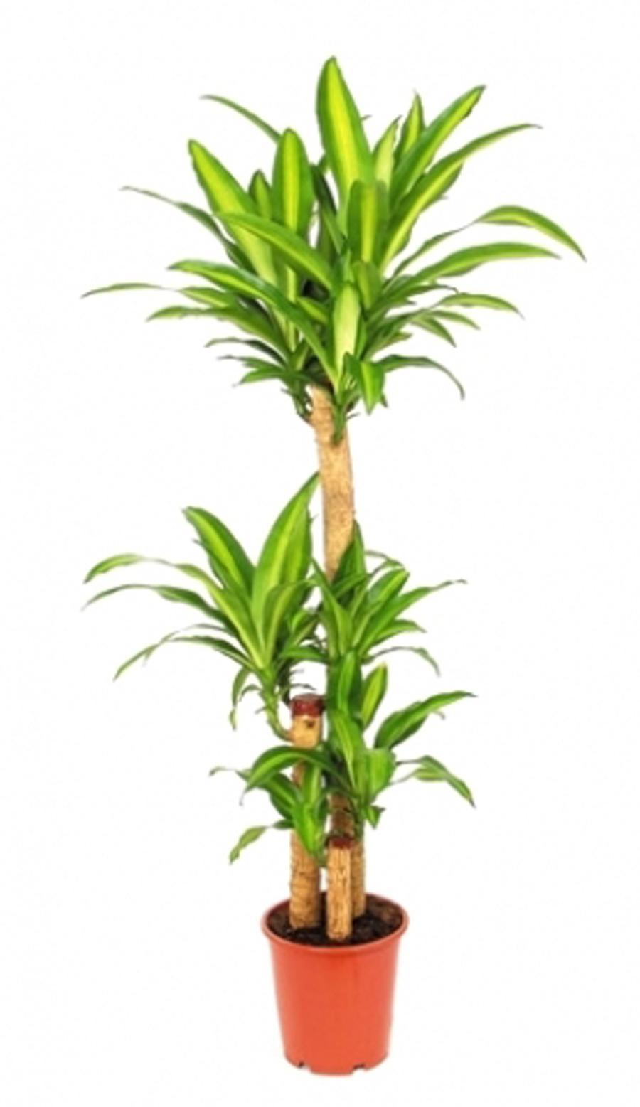 FLORS - Распродажа цветов и комнатных растений со скидкой