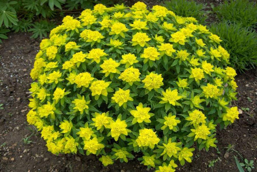 Декоративные цветы для дома фото