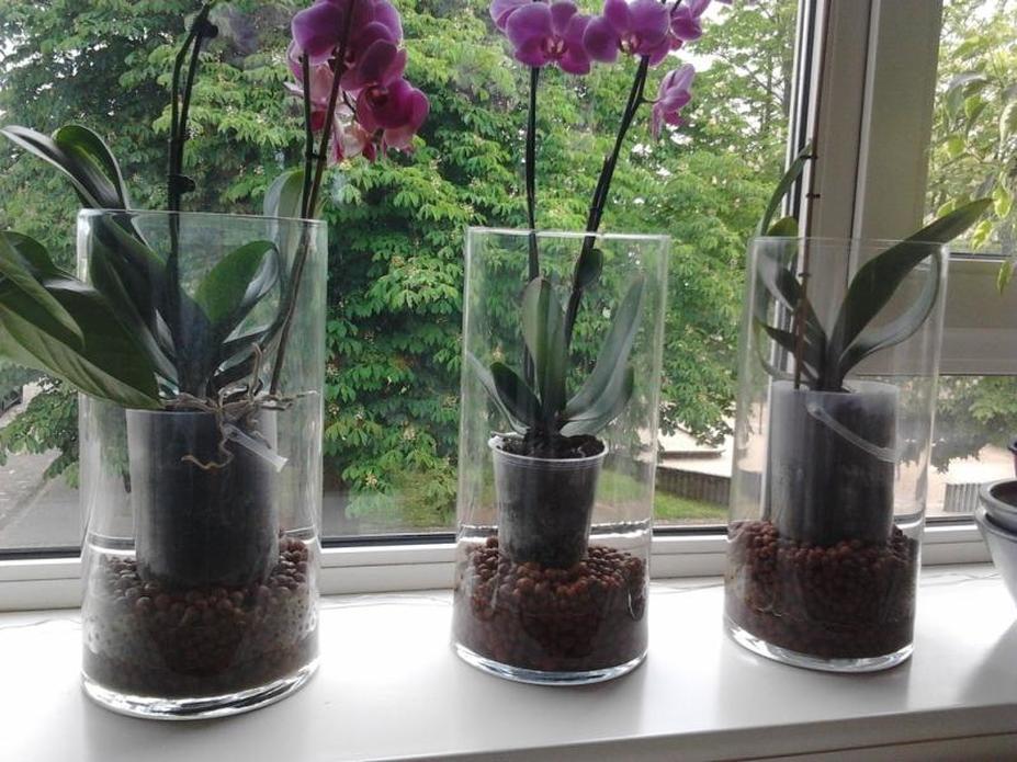 Как правильно ухаживать за орхидеей в домашних условиях фаленопсис