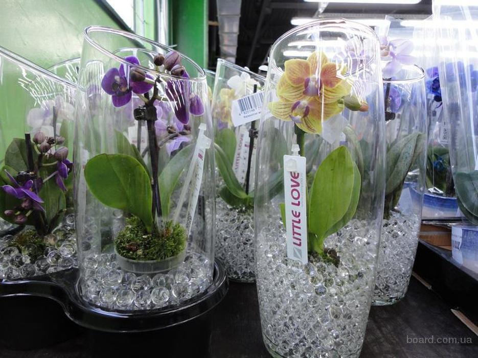 Купить вазы для орхидей купить