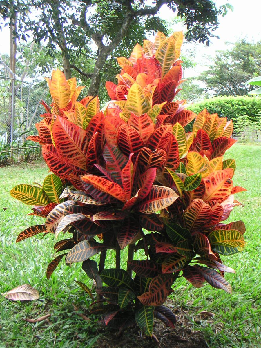 Знак зодиака Козерог: цветы-талисманы на удачу 55