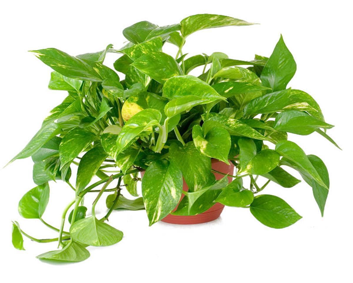 6 растений которые сделают воздух дома лучше  Salatshop