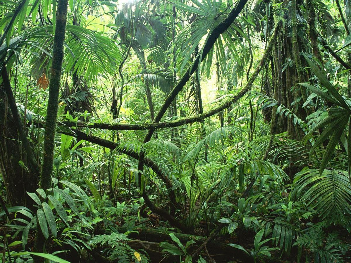 комнатные растения всех видов в картинках