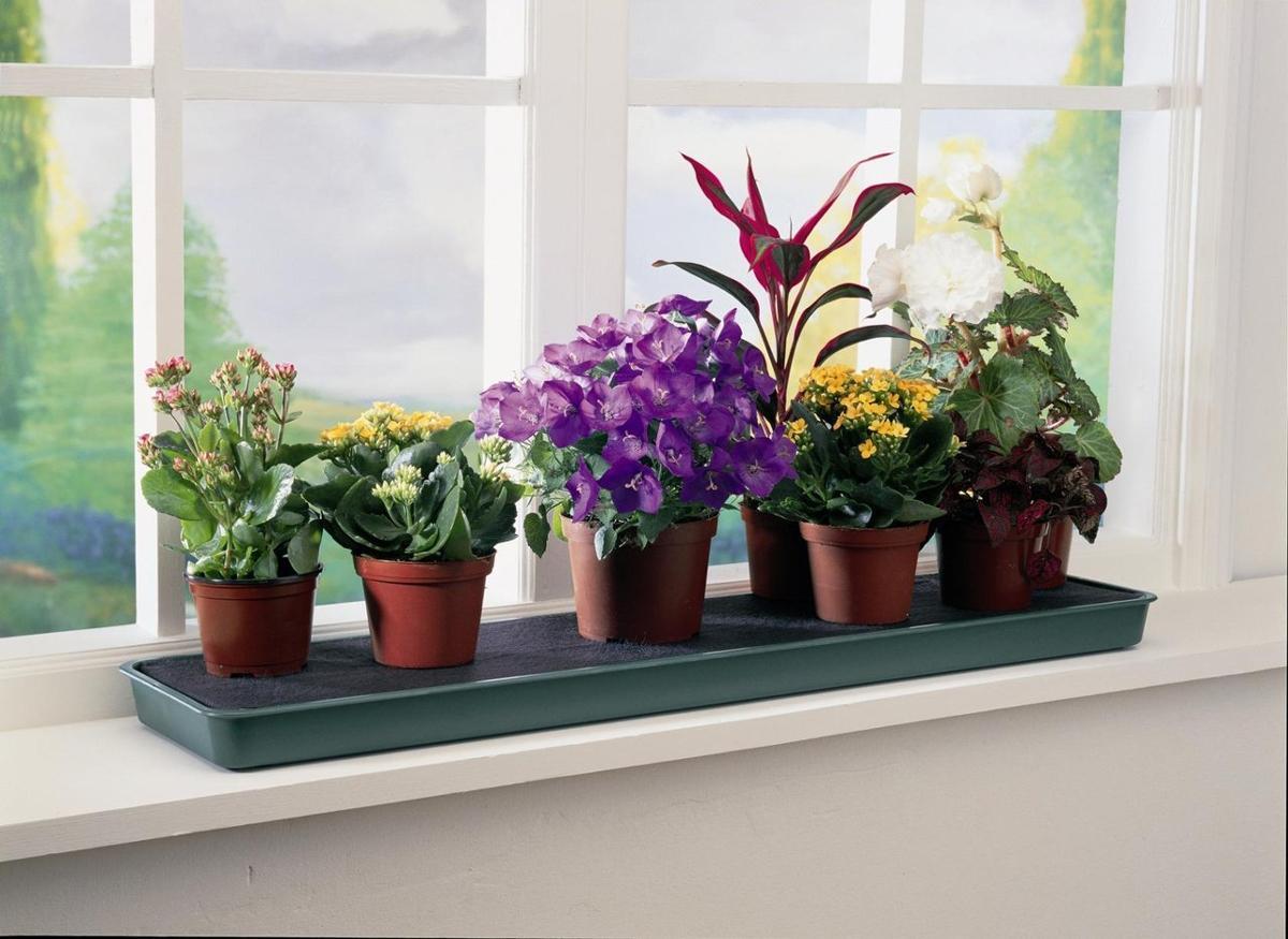 встречается под какие цветы можно сажать в квартире фото чем волнуются будущие