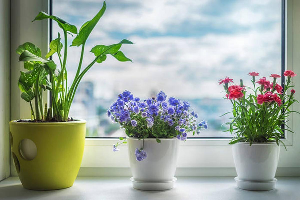 цветущий подоконник фото