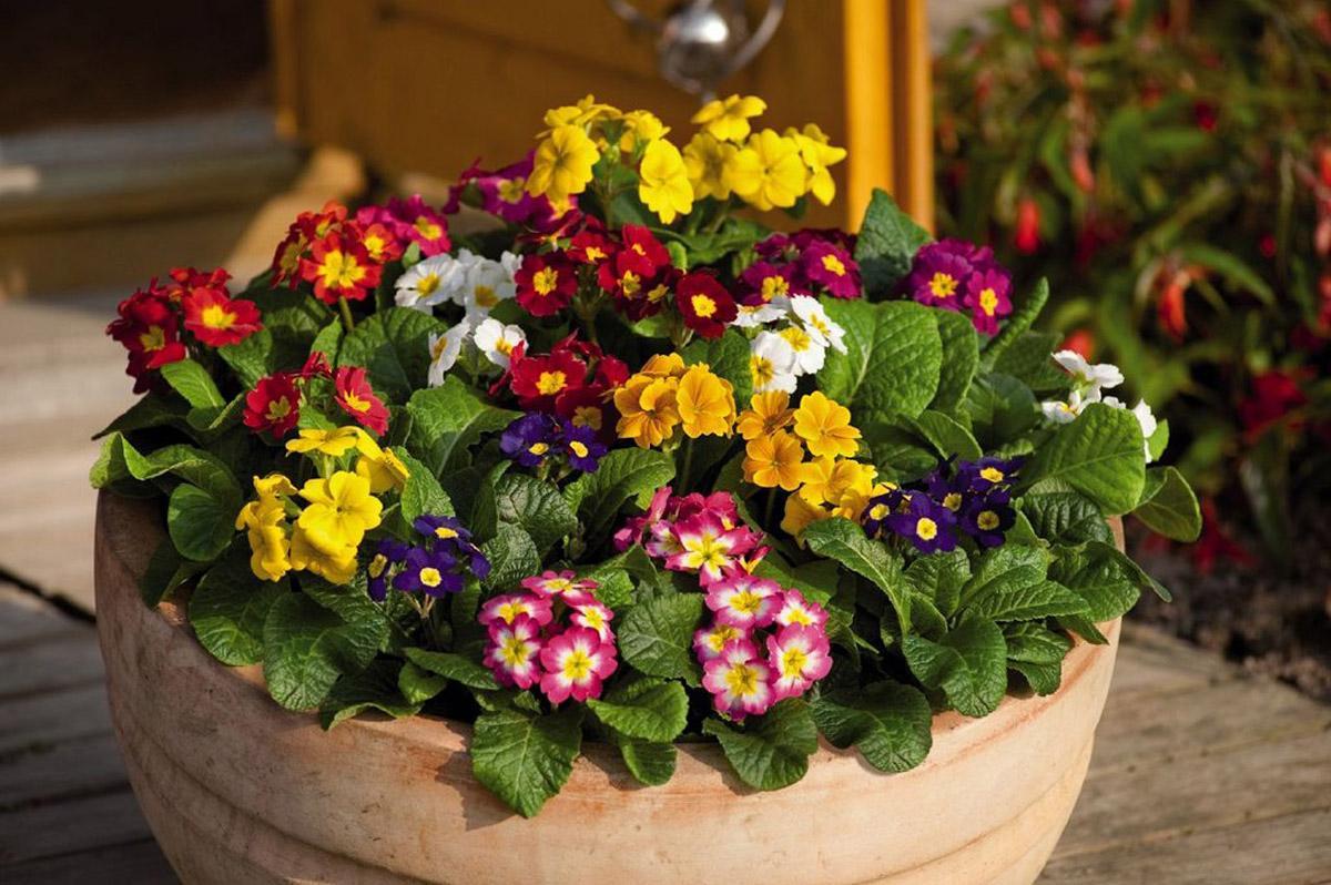 цветы для сада и комнатные фото игры