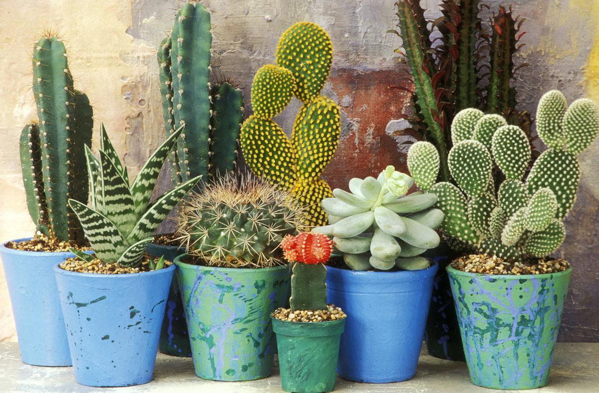 удобно фотогалерея домашних кактусов что каждый нормальный