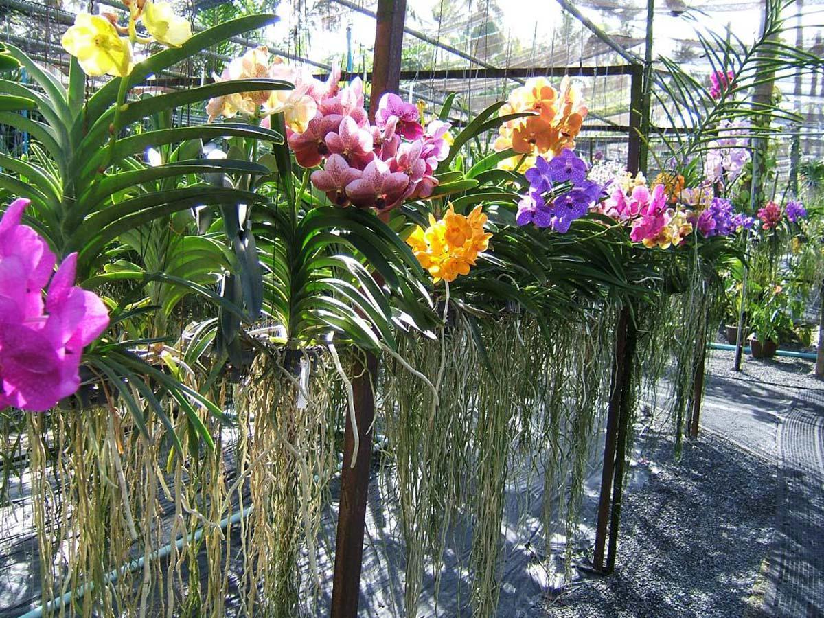 Питомник орхидеи