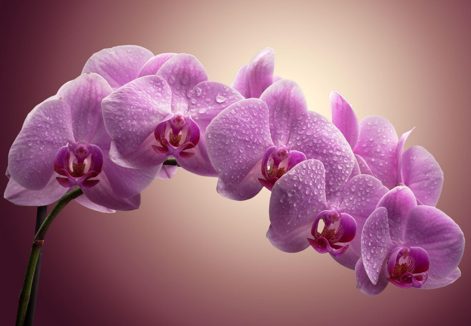Орхидеи в магазине Мандарин