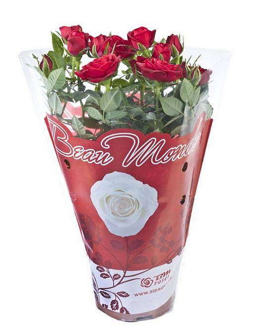 Роза красная- Rosa Hot Jewel D10 H25